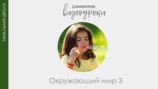 Расцвет Древнерусского государства | Окружающий мир 3 класс #29 | Инфоурок