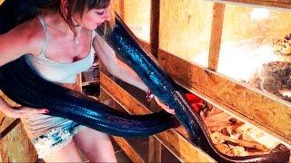 """""""НЕБОЛЬШОЙ"""" несчастный случай с нашей самой тяжелой змеей. Взвешивание сетчатого питона"""