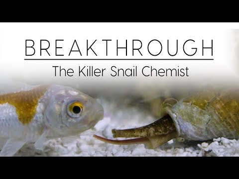 Breakthrough: The Killer Snail Chemist