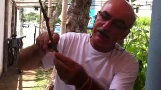 Enxerto de uva com Sérgio Semerdjian