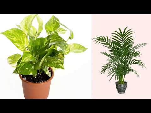 Whatshaap Status Nenu Vrukshani Raa! Songimportance Of Trees, Telugu Private Songs, Telugu Private F