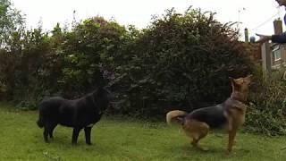 Смешные падения собак. Прикольная подборка