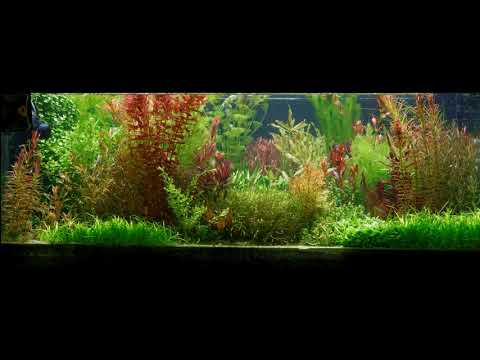 Time lapse video of my tank showing aquatic plants growing for almost a year.