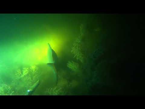 Подводная охота - речка в городе