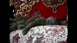 А котам снятся сны?!