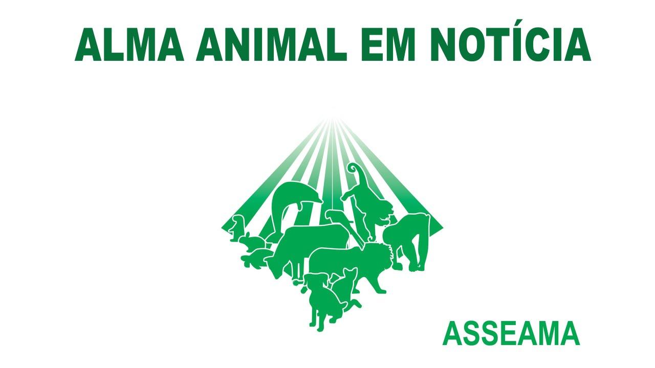 Conheça a Asseama - Associação Espírita Amigos dos Animais