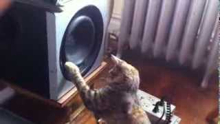 Cat vs Subwoofer