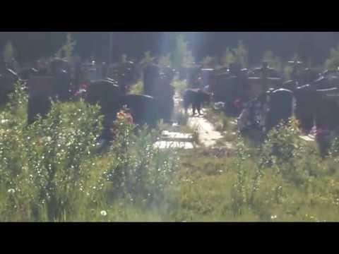 медведь на Успенском кладбище Ухта