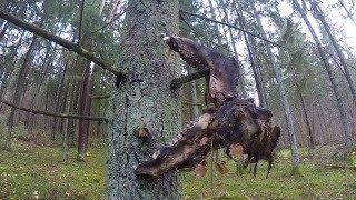 Я НАШЕЛ и КТО ЭТО?! Прогулка с металлоискателем в лесу