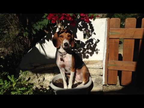 Funny dog video #Zoitsa
