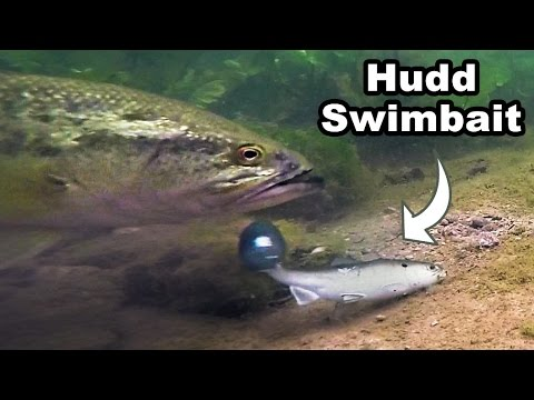 Craziest Underwater Swimbait Footage You Have EVER Seen! Huddleston GoPro Big Bass
