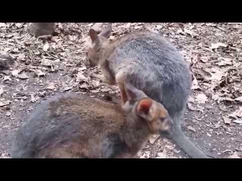 snakes ~ WILDLIFE sydney zoo (( ! ))