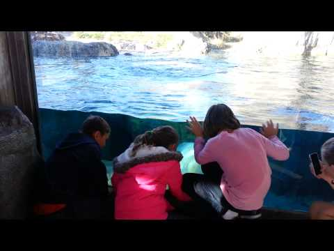 The polar Bear at Hogle Zoo