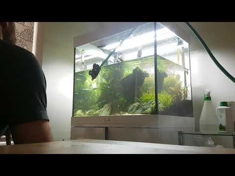 Weekly maintenance on Juwel aquarium