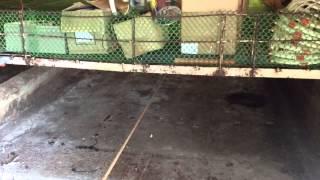 Poultry Manure Scraper System, Goldenbarn Livestock Farm, Mabitac Laguna, Philippines