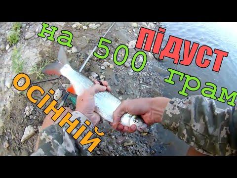 Рыбалка на подуста   ловля подуста на донки фидер на р Тиса