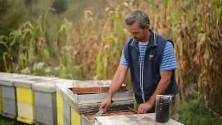 mocznanja.ba: Uvod u pčelarstvo