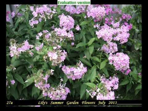 Lily's Summer Garden & Flowers PART 3