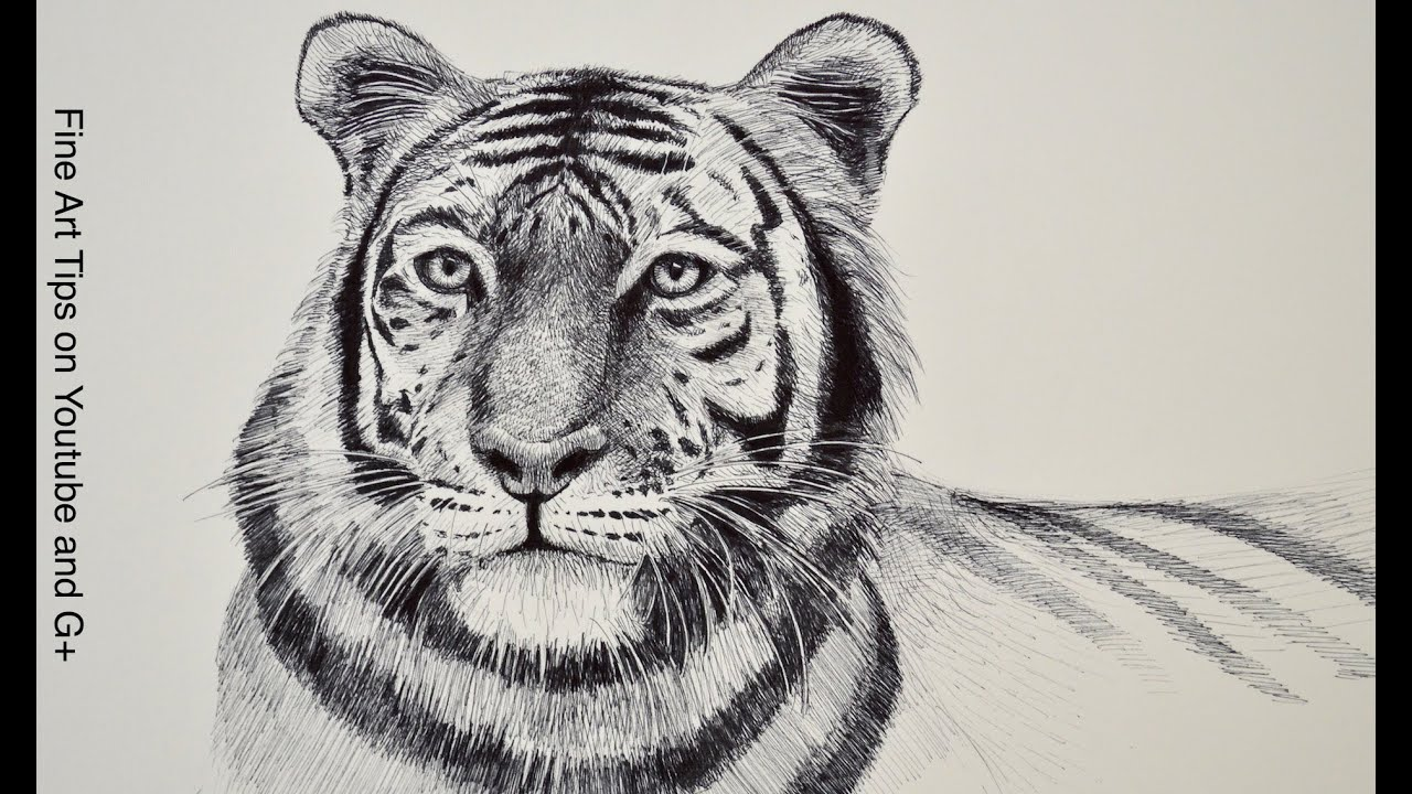 Line Drawing Of A Tiger S Face : How to draw a tiger head with marker youtube