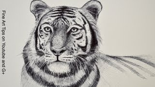 How to Draw a Tiger - Tiger Head With Marker