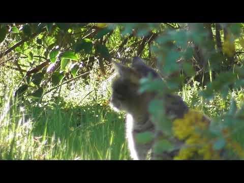 Cute Tabby Tiger Cat 🌿🐱🌿🌿