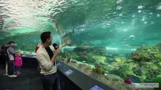 Aquário de Toronto oferece diversão para crianças e adultos