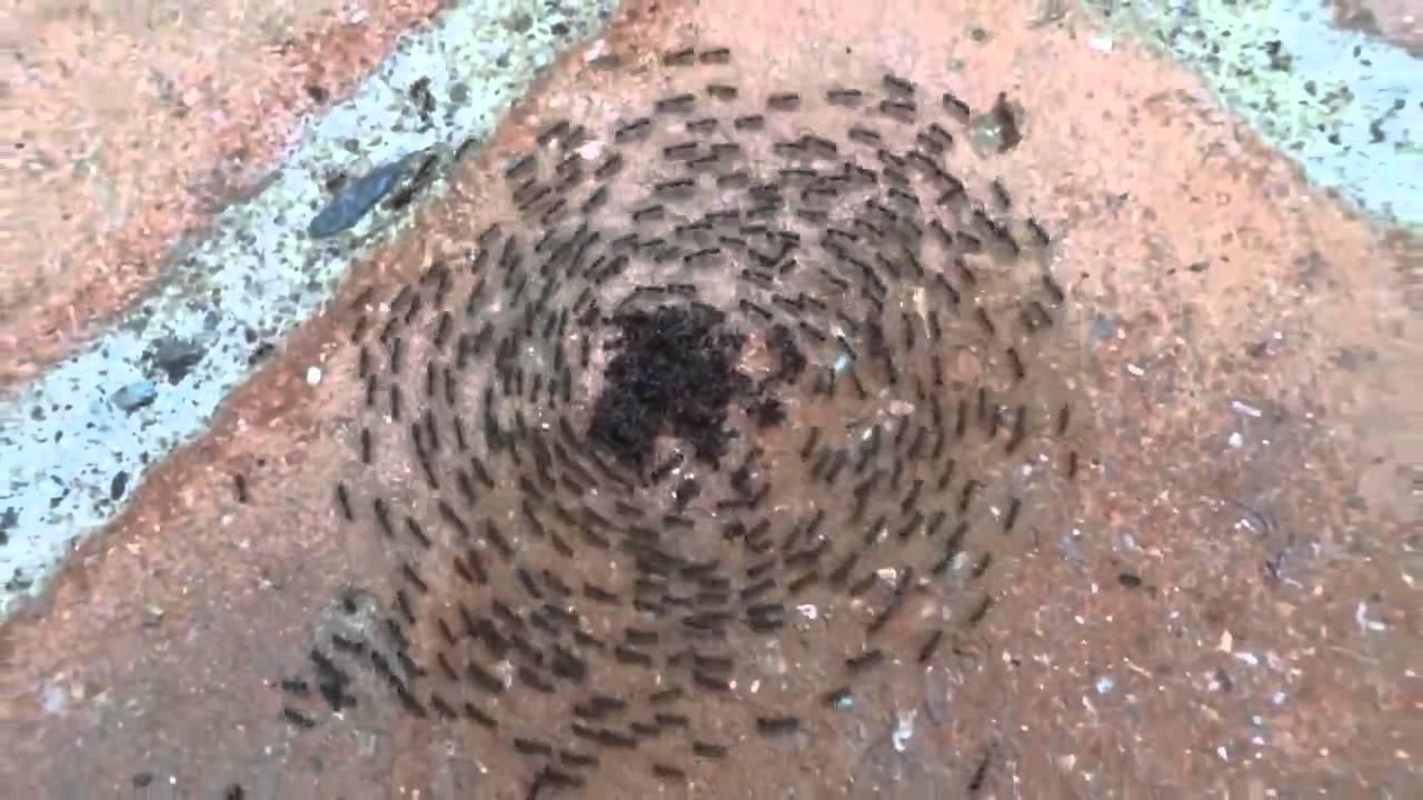 ants mosh pit youtube