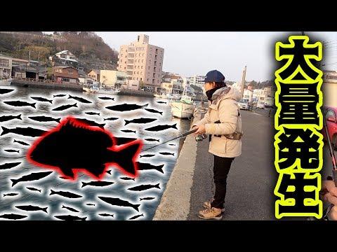 アジングロッドにまさかの魚が!