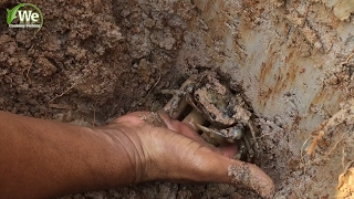 We Survival - Find and Catch Crabs In Hole