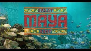 audubon aquarium of the americas maya reef exhibit dive