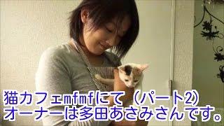 関内駅から徒歩1分。 関内幸和ビル6Fにある 猫カフェmfmf。 オーナーは...