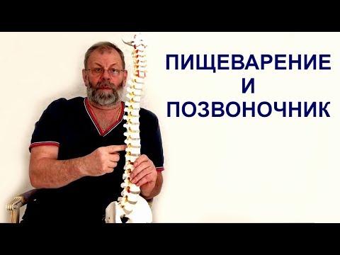 Спина болит из за желудка