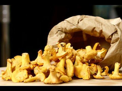recette-de-cuisine-:-cueillette-et-conservation-des-chanterelles-(girolles)