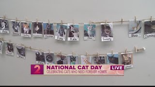 Take2: Celebrating National Cat Day At Hawaii Cat Cafe