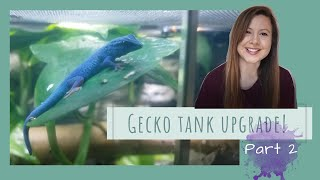 Electric Blue Day Gecko Enclosure Upgrade - Planting - PART 2