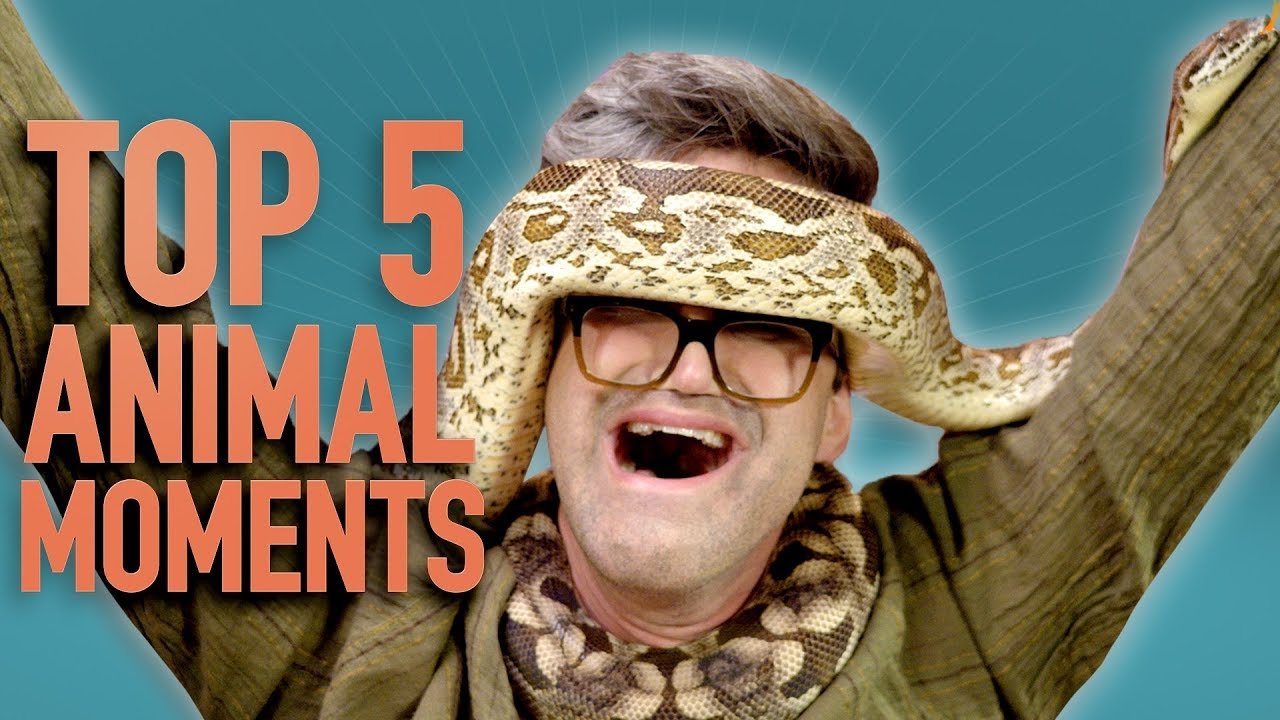 Top 5 GMM Animal Moments (2018)