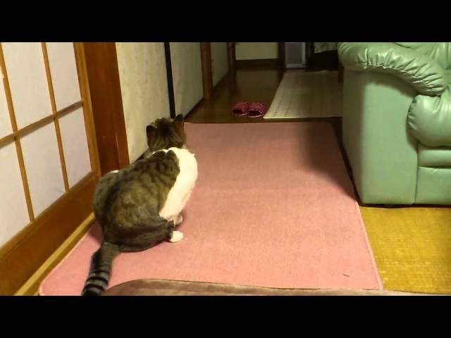 猫が静かにお尻を拭く瞬間