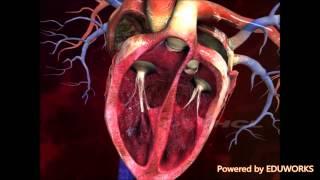Structure of Human Heart-Digischool