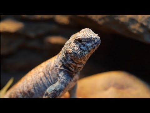Rachel and Her Reptile Khan: A Petco Associate Spotlight