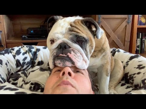 Reuben the Bulldog: Patience With My People