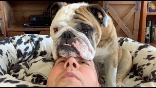 reuben-the-bulldog-patience-with-my-people