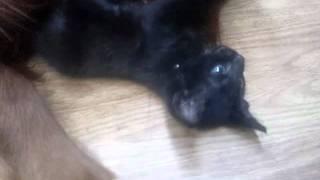 心温まる光景です! 仔猫はアイリッシュセターのヴィッツに身を委ねてま...