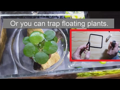 Let's Make - A Fish Feeding Station / Floating Plants Trap