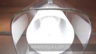 ARANDELA LUPUS ARQUITETIZZE