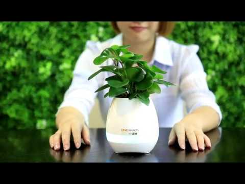 Smart Flower Pot Music Vaseelectric Vase Youtube