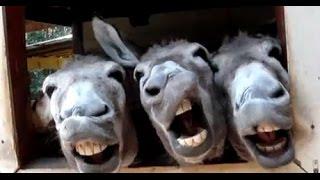 Приколы2015 Смешные голоса животных