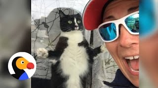 Funny Cat Greets Mail Woman Daily | The Dodo