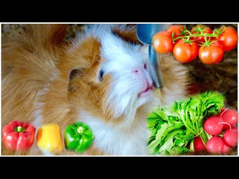 Guinea Pig Safe Vegetables