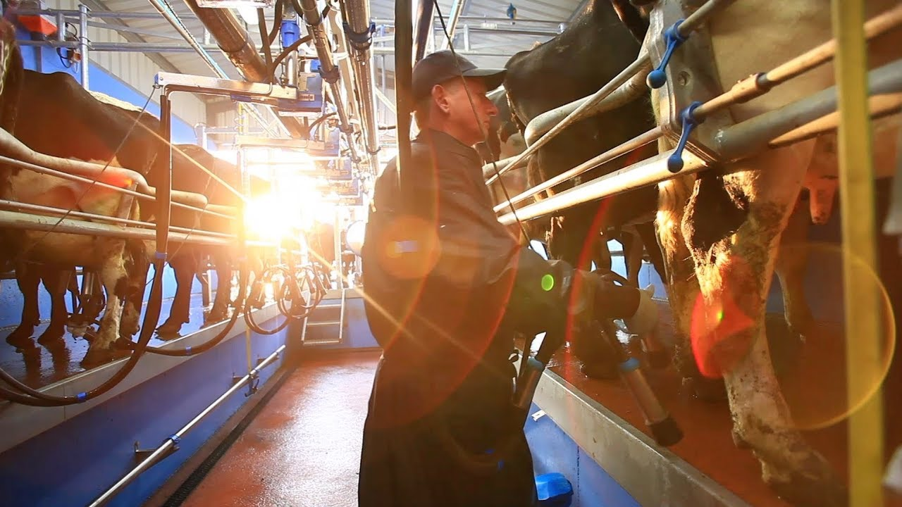 Dairymaster herringbone swing milking parlour youtube