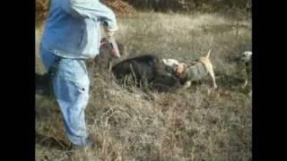 Wild Ass Hogs XXX